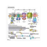GeneSpring GX (3)